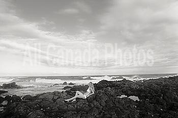 Hawaii, Oahu, Sandy Beach, Girl relaxing by the ocean (Sepia photograph).